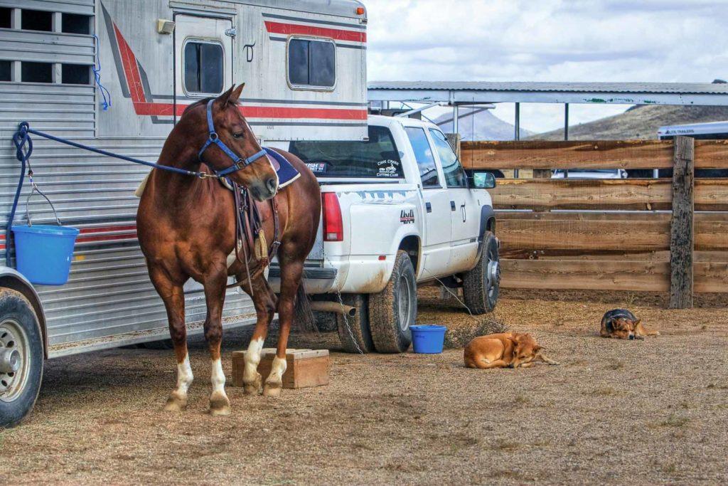 horse-hitch-truck